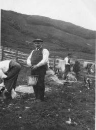 JohnStewart Sheep Shearing